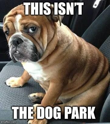 This isn't the dog park