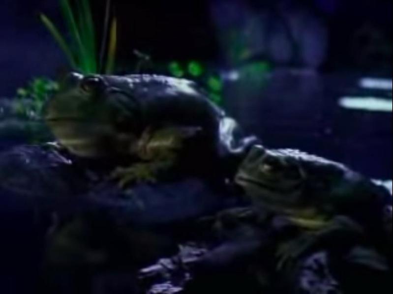 Frogs — Budweiser