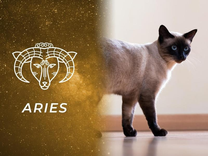 Aries: Siamese