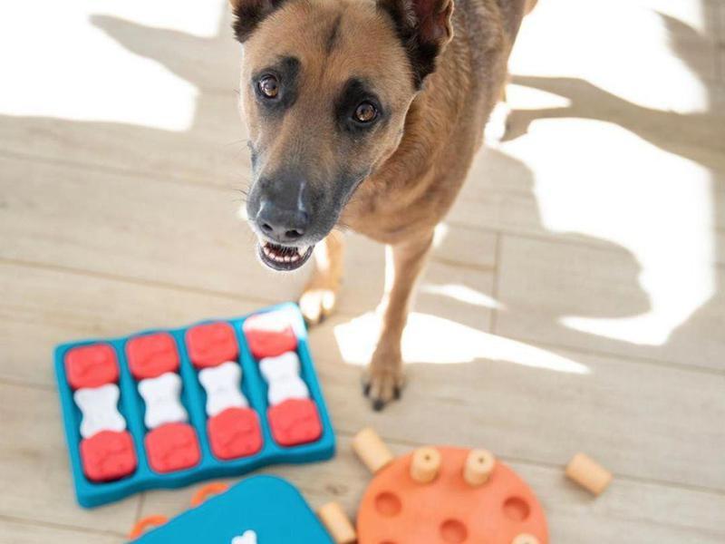 Dog with dog puzzle toys