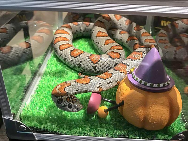 Tokyo Snake Center