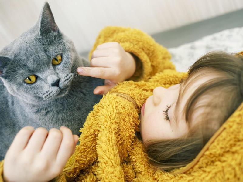 Happy child with British shorthair cat