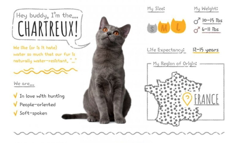 Chartreux Summary