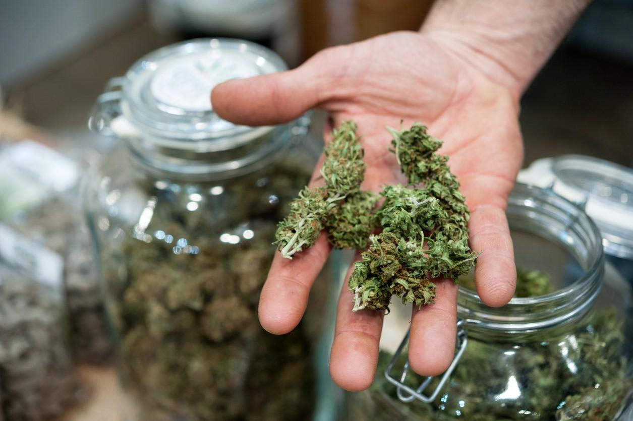 A handful of marijuana
