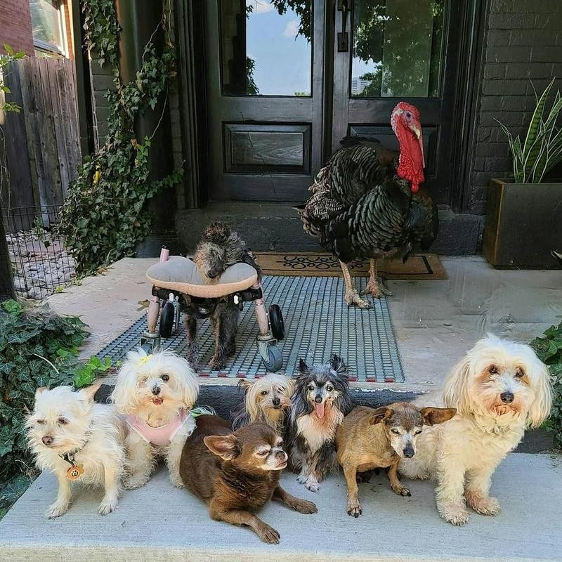 Steve Greig's Seniors and Rescues