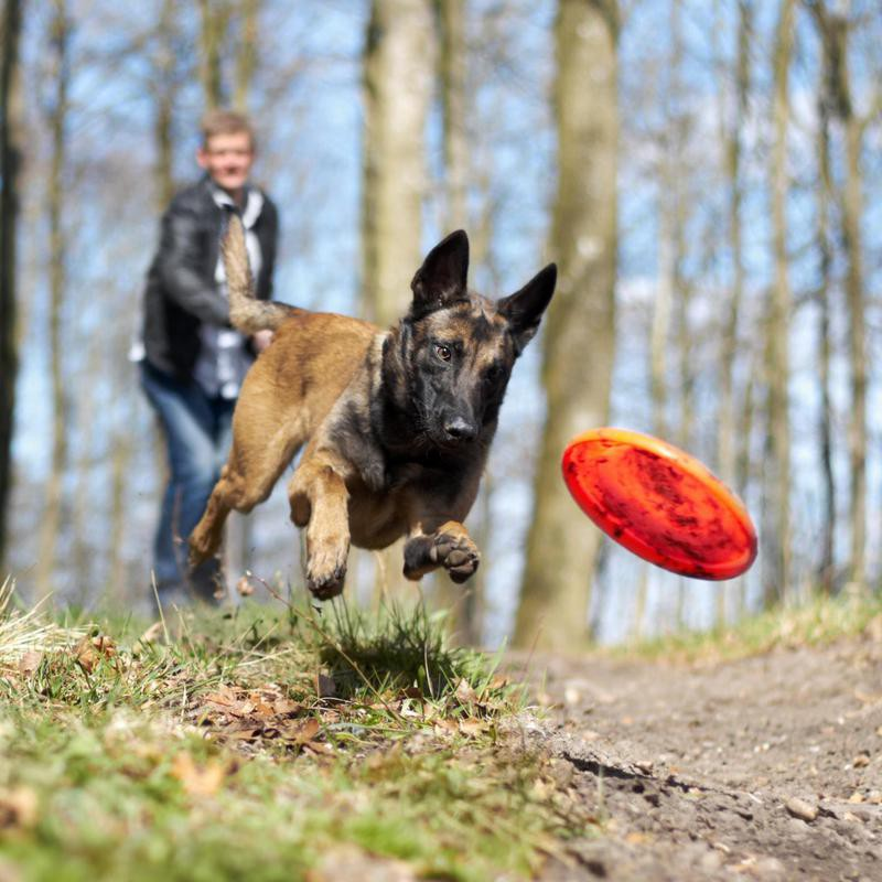 Fetch with a frisbee