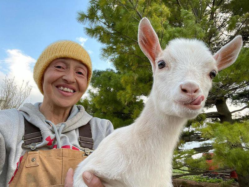 Baby goat with its tongue out