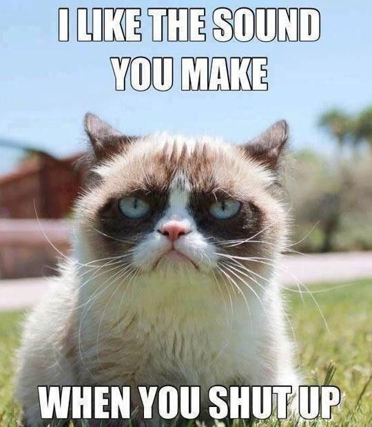 Cat with a mean message