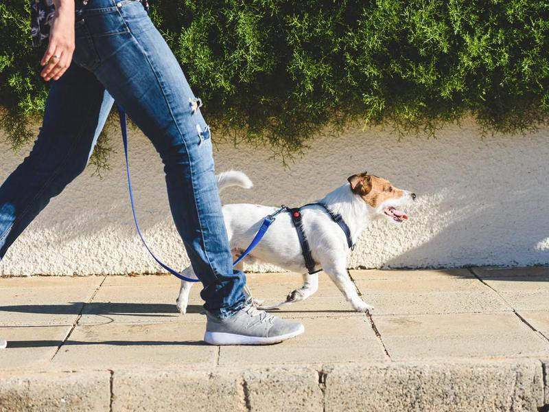 Go on Sniff Walks