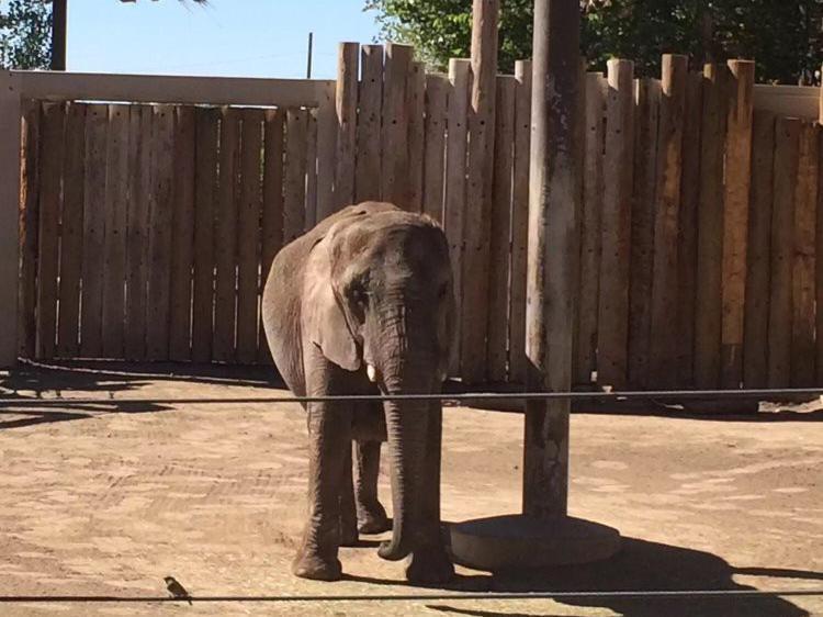 Sad-looking elephant at Worst Zoo