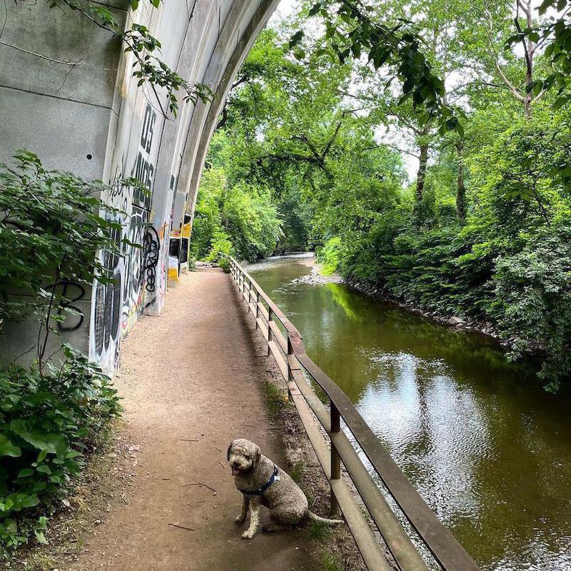 Dog sitting by creek