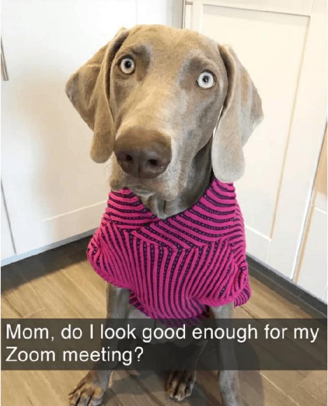 Dog wearing pink sweater