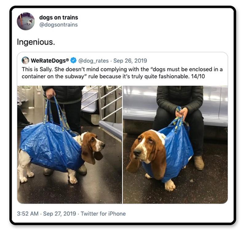 Dog in an Ikea bag