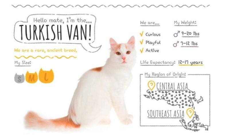 turkish van dog-like cat