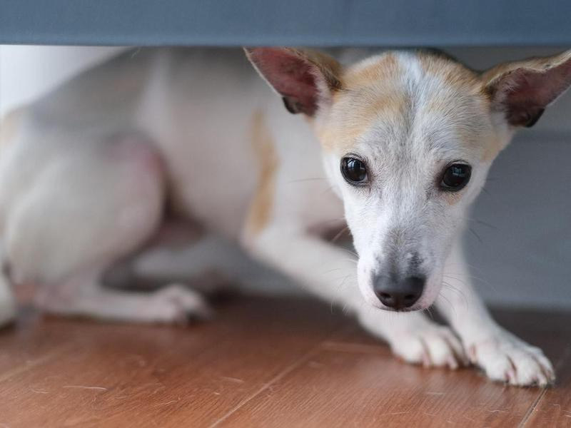 Help Your Dog Equate the Safe Area With Positive Experiences