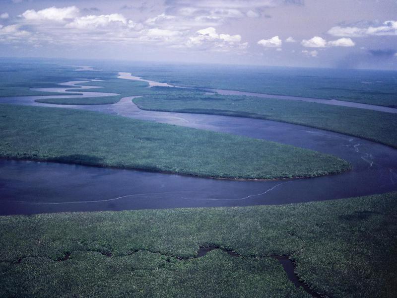 Borneo Lowland Rainforests