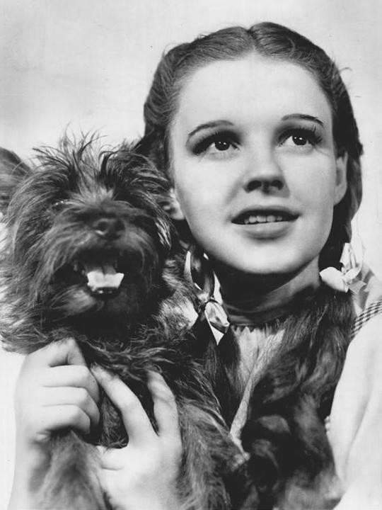"""Dorothy and her dog Toto in """"The Wizard of Oz"""""""