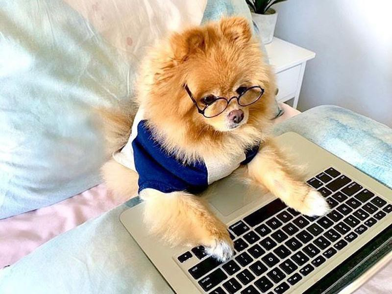 Chow working on a Macbook