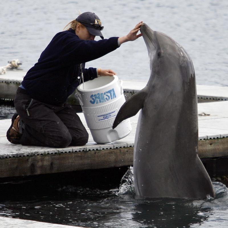 "U.S. Navy Dolphin ""Shasta"""
