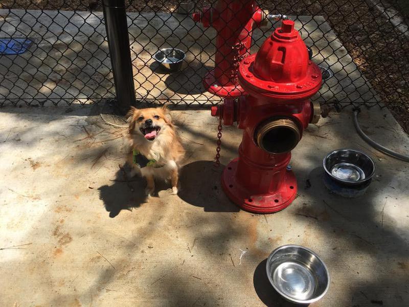 Dog Park at the Rez