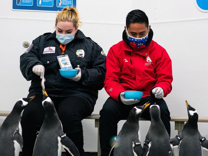 Loveland Living Planet Aquarium penguins