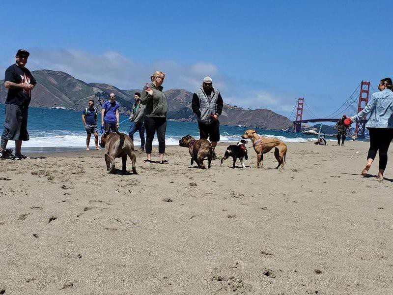 Dogs playing at Baker Beach