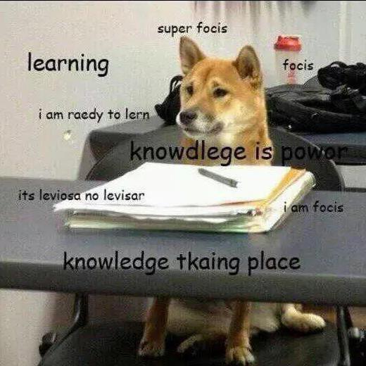 Shiba Inu doing homework meme