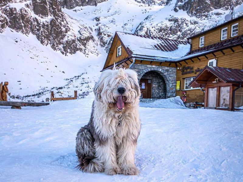 Dog in Slovakia in winter