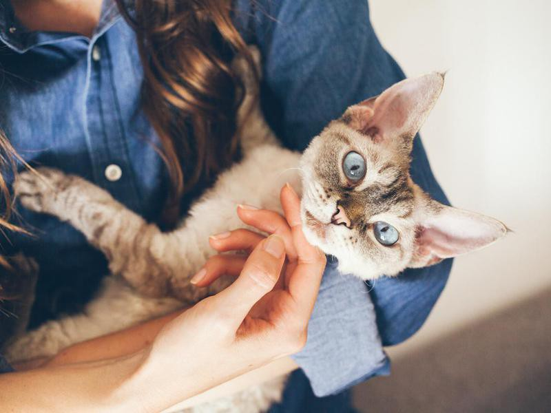 Young woman is cuddling and hugging her cute curious Devon Rex cat