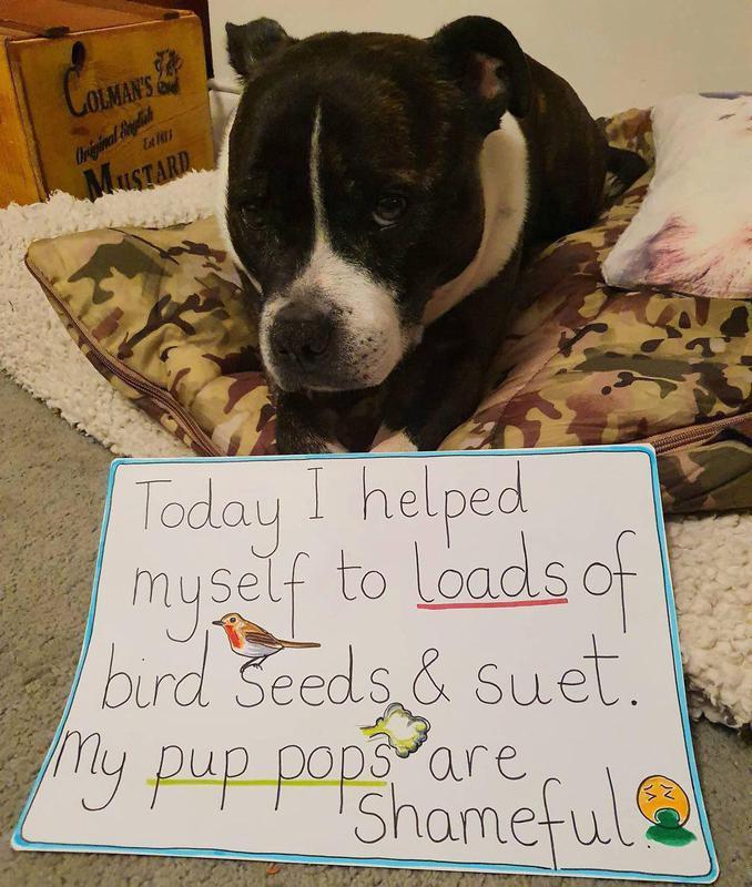 Dog ate bird seeds and suet