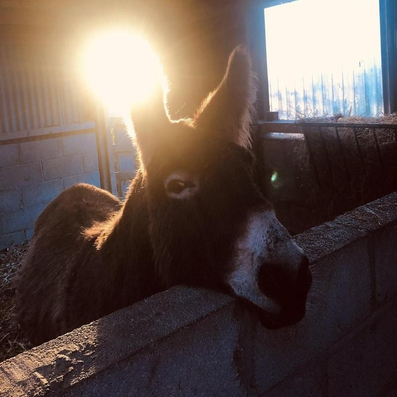 Eli the Donkey
