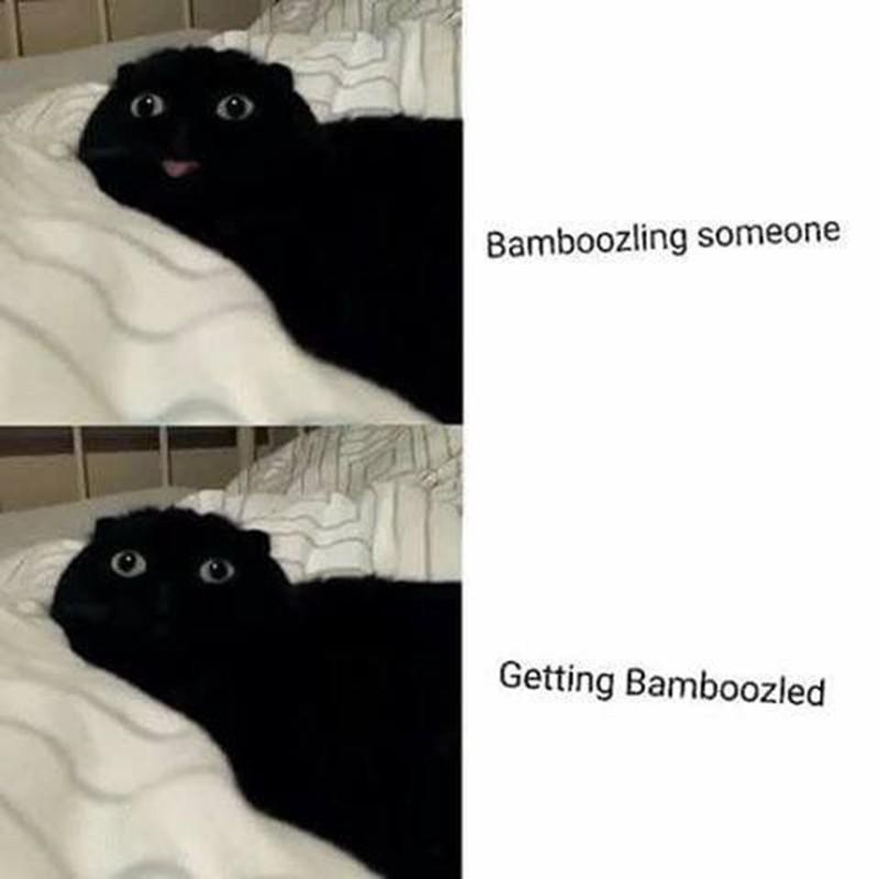 Cat bamboozling someone