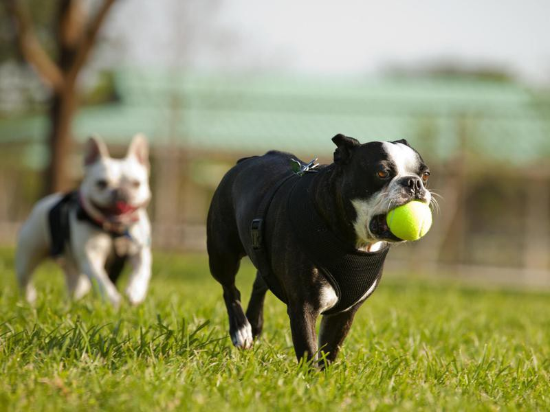 How to Teach Your Dog to Play Fetch