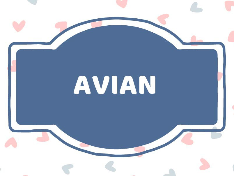 French baby name: Avian