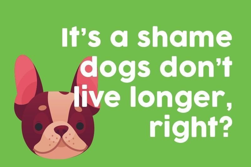 It's a shame dogs don't live longer, right?