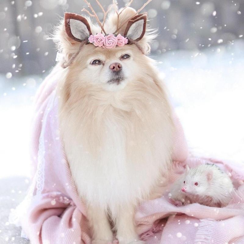 Hedgehog and dog
