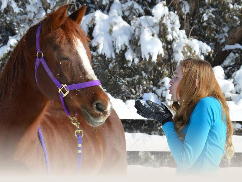 Girl with her Morgan horse