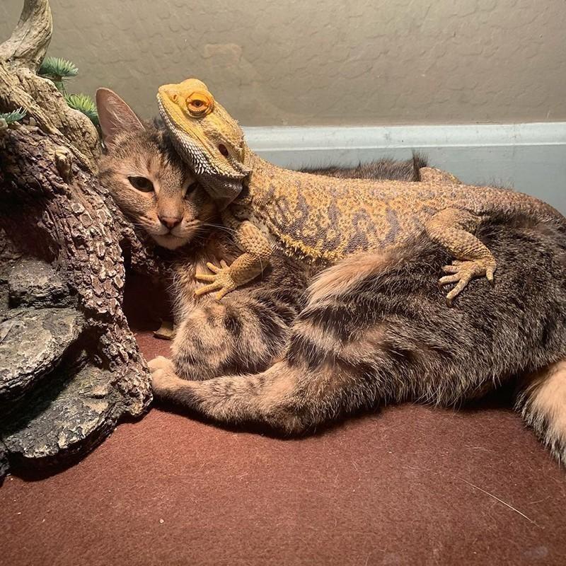 Cat and lizard