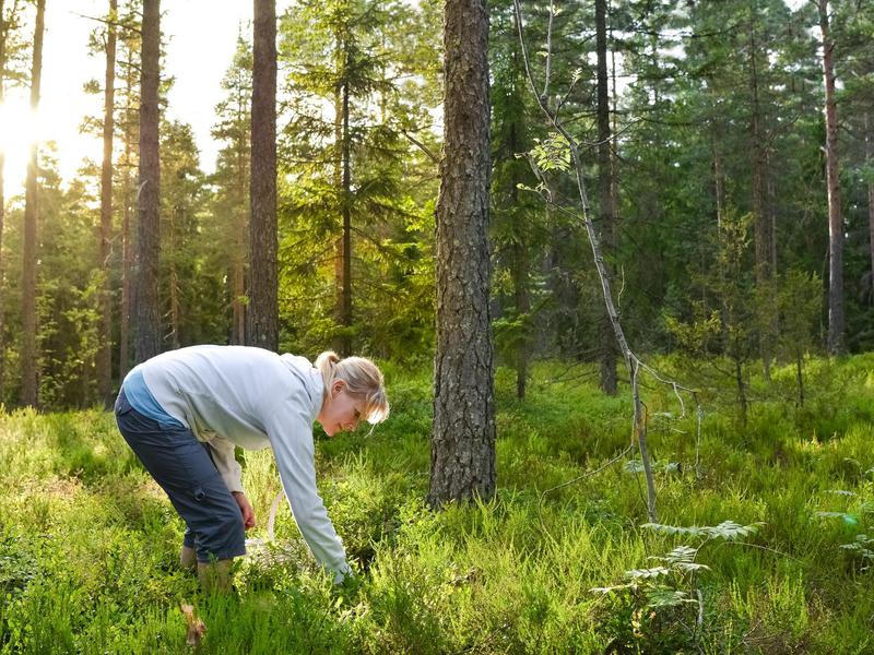 Woman in forest in Finland