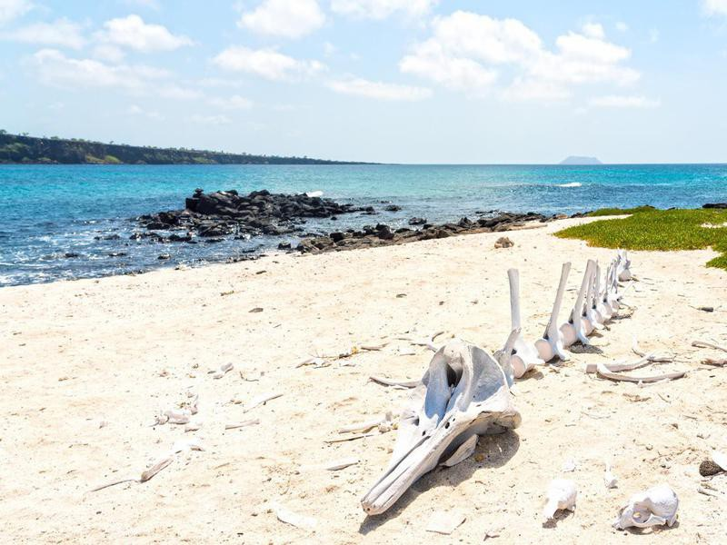 Bones of Dolphin On the Beach