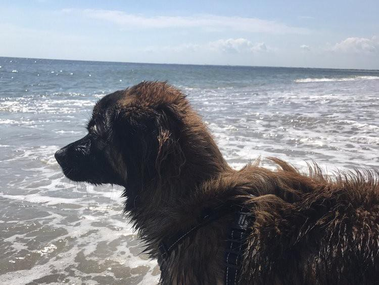 Dog friendly beach at Bald Head Island