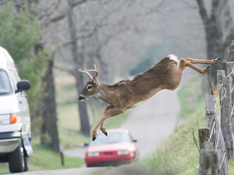Deer jumping near road