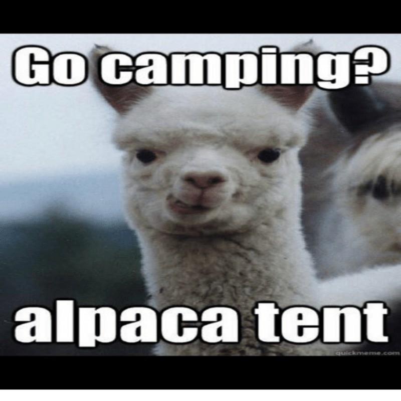 Camping pun meme