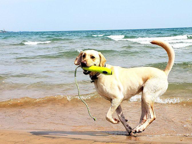 Dog playing fetch at beautiful beach