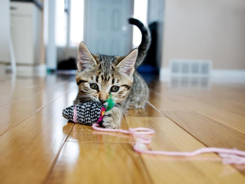 'Loki' Boy Cat Name
