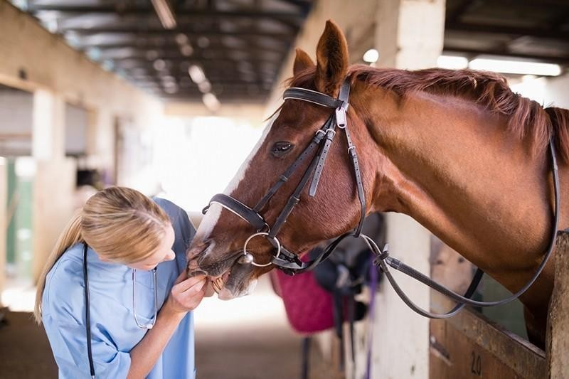 horse and vet