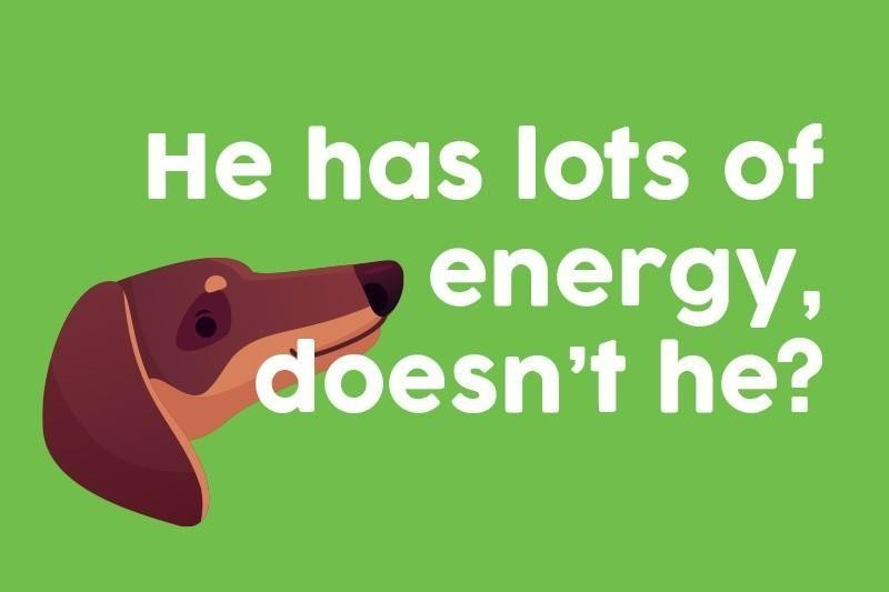 He has lots of energy, doesn't he?