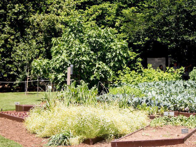 White House Kitchen Garden