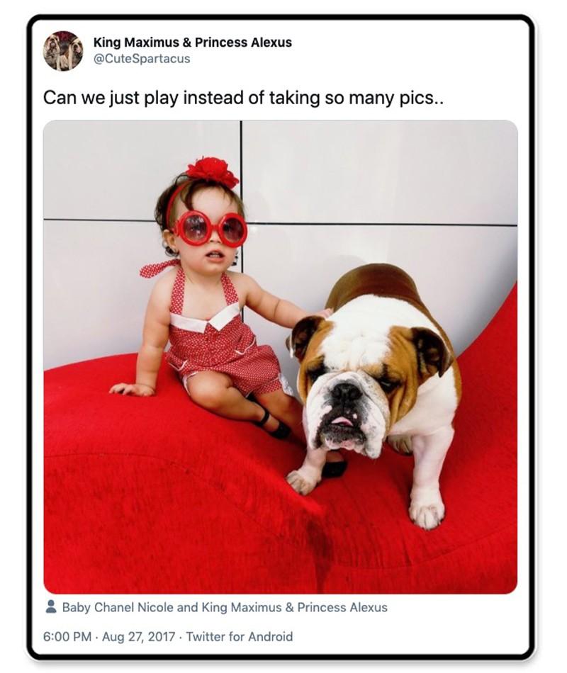 Bulldog and child