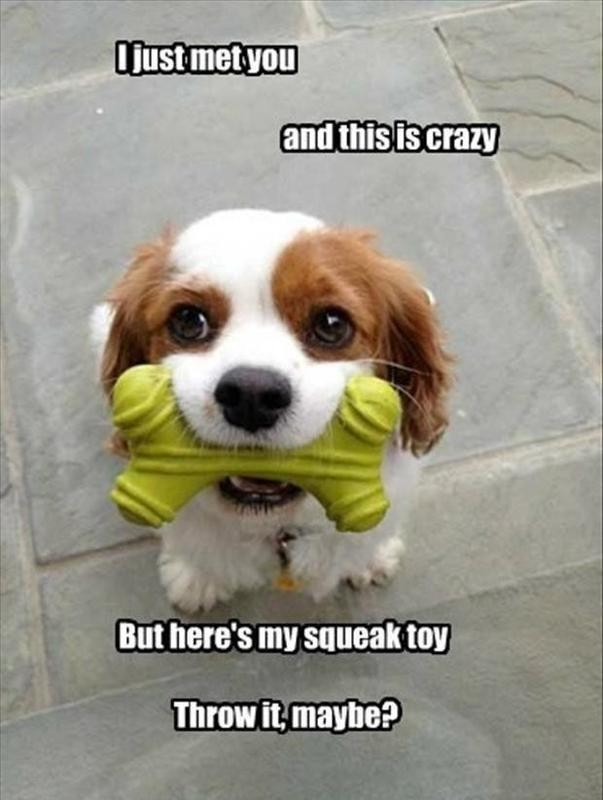Dog with a squeak toy